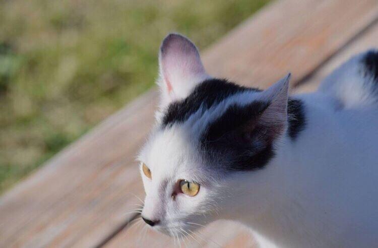 Showcase: February EyeEmAnimalLover EyeEm Best Shots Kitty Cat Animals