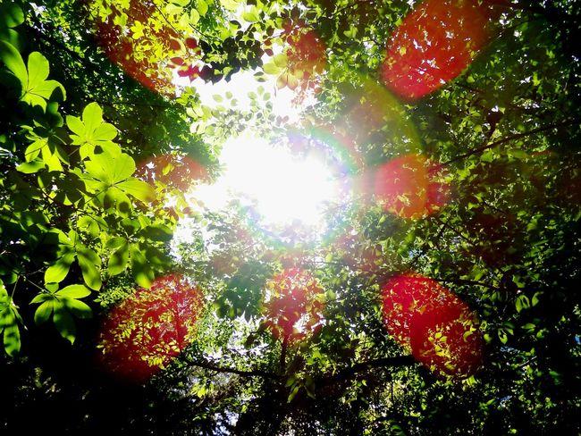 Shinjuku Sun Sunshine Green