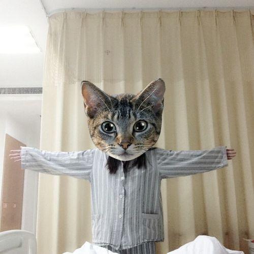 Hug Cat Funny That's Me