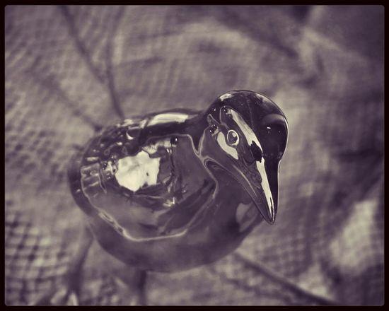 Black Bird Porto Taking Photos Monochrome