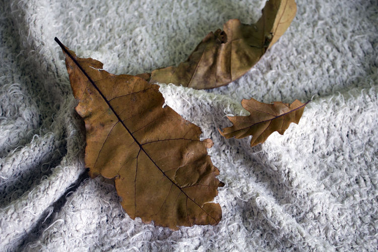 Leaf Plant Part Autumn Close-up Maple Leaf Nature Leaves Fall Trees Forest Wood Blanket Home Inside Warm Comfortable Fragility Vulnerability  Plant Leaf Vein Falling Beauty In Nature