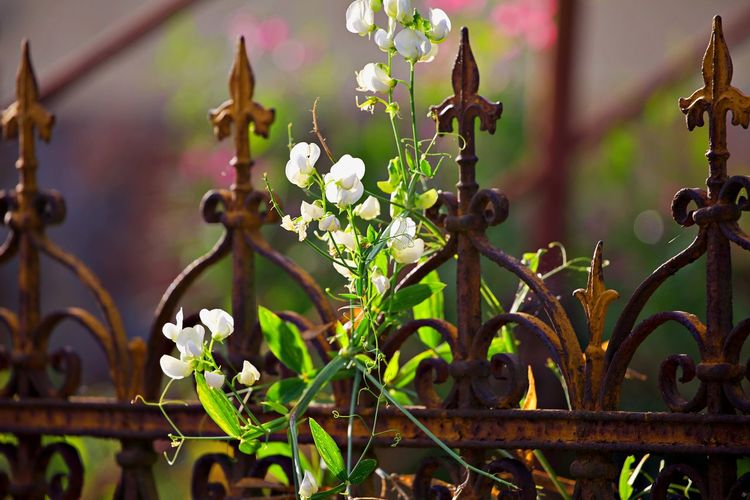 Close-up of flowering plants on metal