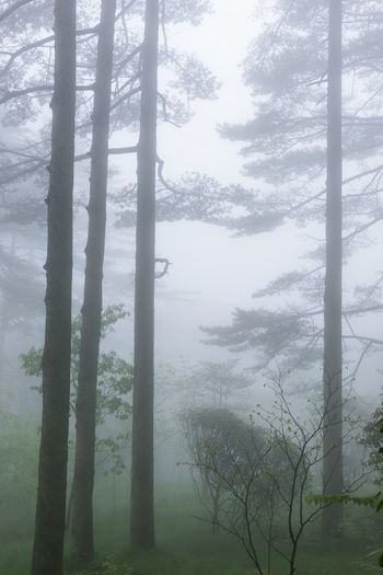 Beauty In Nature Day Fog Foggy Forest Growth Hazy  Huangshan Idyllic Landscape Mist Nature No People Outdoors Scenics Sky Tranquil Scene Tranquility Tree Tree Trunk