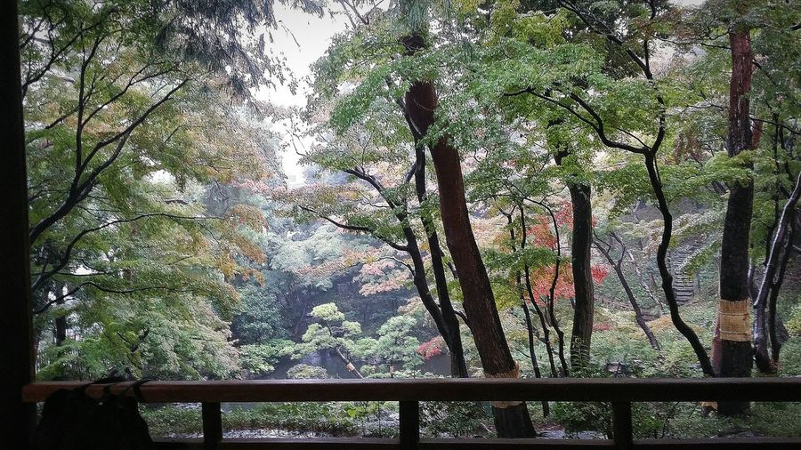 Place Of Scenic Beauty Trees Autumn Fall 秋 Autumn Colours Autumn 2015 Tokyo Autumn 2015 Changing Seasons Urban Nature Tokyo Nature Nature Naturelover EyeEm NatureLover Naturephotography Naturecollection Rain Sun-less Before Peak Landscape Garden Eguchi Teijo Iwasaki Yataro 1913 1929 Tonogayato Teien