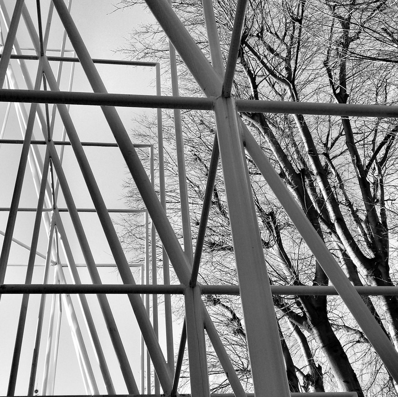 Low Angle View Of Steel Poles Against Bare Trees