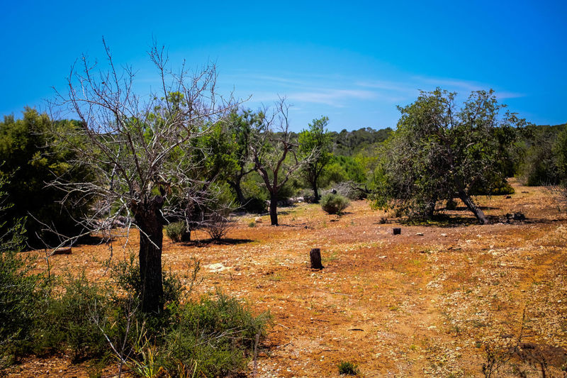 Tree Growth Nature Agriculture Sky Outdoors Day Field Landscape No People Beauty In Nature Oil Pump Mallorcaphotographer Mallorca (Spain) Manuelkiese Mallorcaisland Beauty In Nature