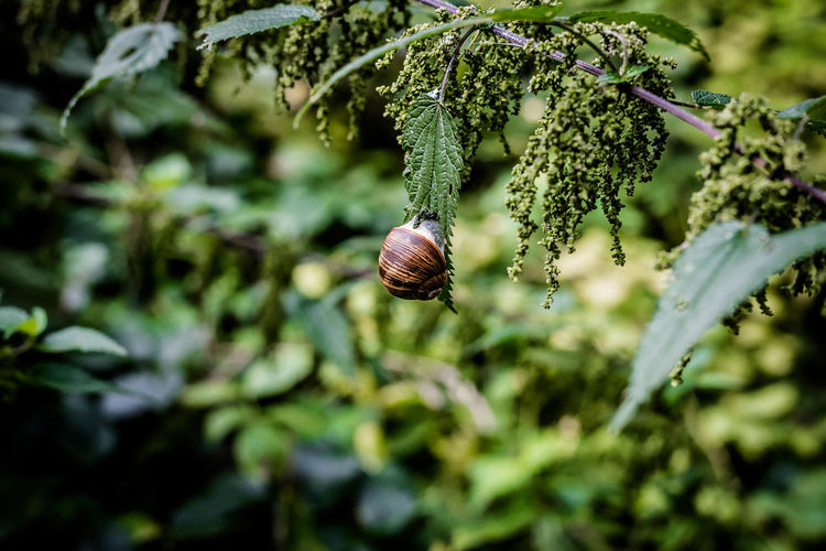 sunday.. today : snail speed Animals In The Wild Brennesseln Nature Nikon Open Edit Schnecke Schneckenhaus Schneckentempo Snail Animal Themes Beauty In Nature Close-up Eye4photography  Forest Forest Photography Gestrüpp Insect Moor  Moor Forest Moorland Nikonphotography Outdoor Photography Outdoors Stinging Nettles Wildlife