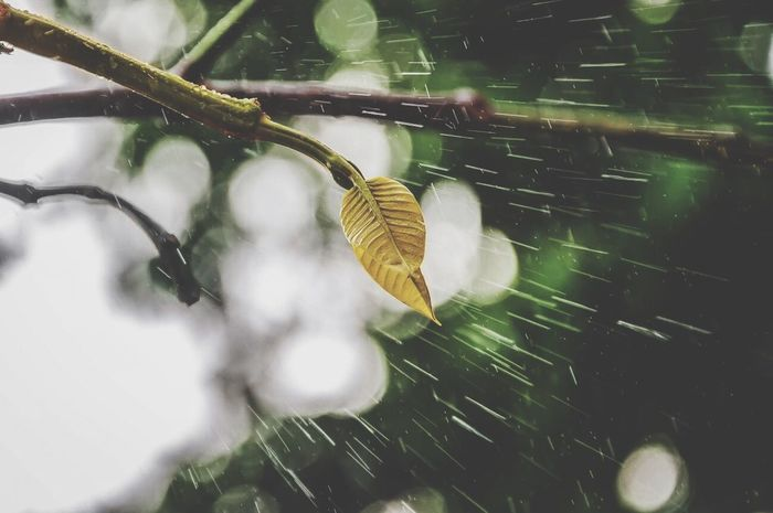 Why shoot rain drops when you can shoot rain lines 😜 Check This Out Taking Photos Rainy Days Nature_collection EyeEm Nature Lover LensOFF