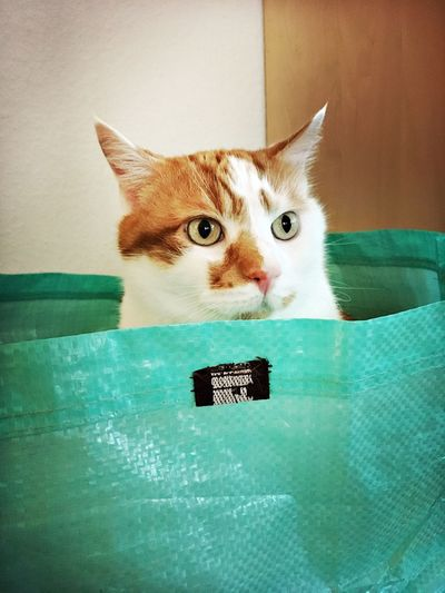 Cat in a Bag Cat♡ Catoftheday Cat Lovers Catinabag Cat Cats EyeEm Selects Domestic Cat Pets Domestic Cat Feline Domestic Animals Home Interior Animal Themes Animal One Animal Indoors  Portrait No People Animal Body Part Whisker Vertebrate Mammal
