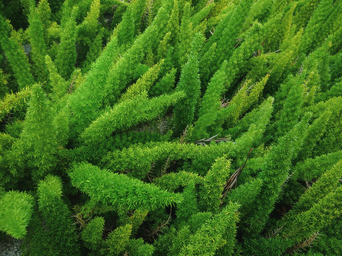 Green only Green Color Plant Nature Field No People Outdoors Foliage Lush Foliage