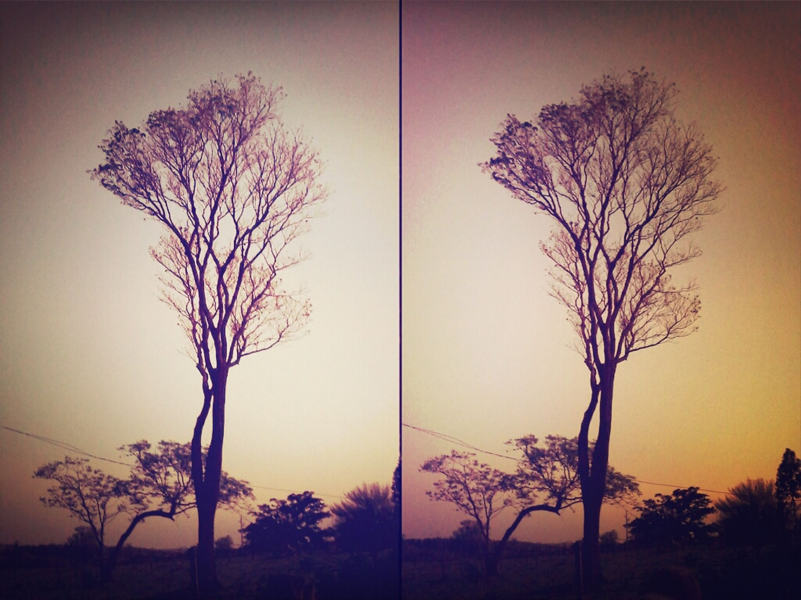 bare tree, sunset, silhouette, tree, branch, tranquility, tranquil scene, scenics, beauty in nature, orange color, nature, sky, tree trunk, clear sky, idyllic, dusk, no people, outdoors, landscape, growth