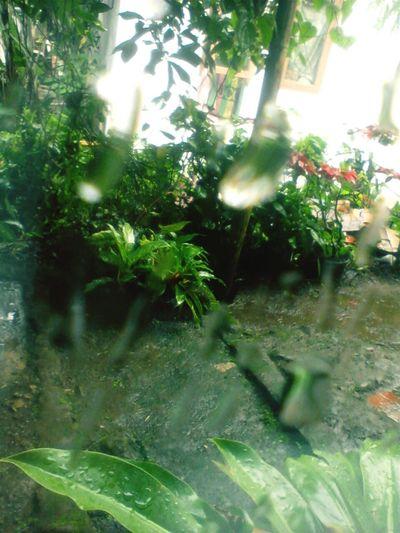 AmateurPhotograph Art Taking Photos Morning Glass Rain Rainy Days Backyard Home INDONESIA #raindrops