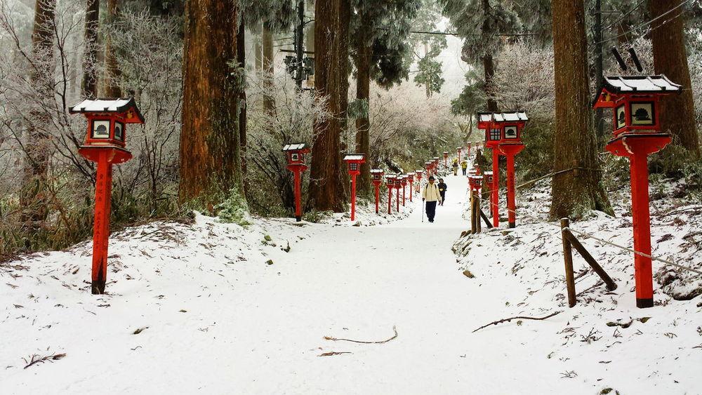 OSAKA Kongozan Hiking Trailing Nature Woods Japanese Culture Japan Tradition Snow Cold Temperature Winter