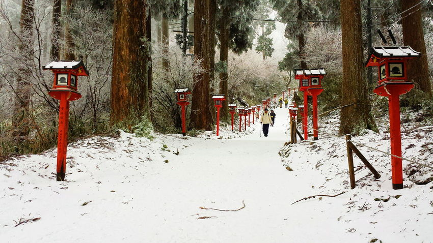 OSAKA Kongozan Hiking Trailing Nature Woods Japanese Culture Japan Tradition Snow Cold Temperature Winter
