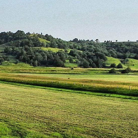 Hills Kansas Farms Rsa_rural Rsa_farm Trb_ex_scapes Trailblazers_rural Trb_green_acres Verdant March_dpt_02