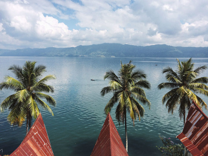 Sumatra  Toba Lake Beauty In Nature Cloud - Sky Day Growth Horizon Over Water Mountain Nature No People Outdoors Palm Tree Scenics Sea Sky Tranquil Scene Tranquility Tree Water