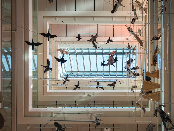 """Trento, Italy - November 19, 2017: The """"MUSE"""" is the Museum of the Sciences of Trento. The interior is characterized by a """"big void"""" where suspended tassidermized animals. Muse Renzo Piano Architect Animals Architecture Big Void Design Elements Exhibition Glass And Steel Hanging Animals Italy Layered Structure Modern Museum Of Science Stuffed Animals Taxidermy Trento Whale Skeleton"""