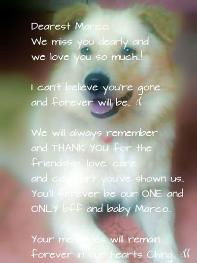 We miss you Marco.. Yesterdays are too different now from today as well as the coming days coz only your scent and memories all is left to stay with us.. :'(( My Beloved Dog Pet Lover We Love You! Rest In Peace ❤ My Beautiful Dog Bestfriends Missing You... Smiling Dog Painful Beautiful Memories