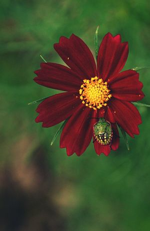 Flower Stinkbug Green Color Plant And Insects Beauty In Nature Plant Life