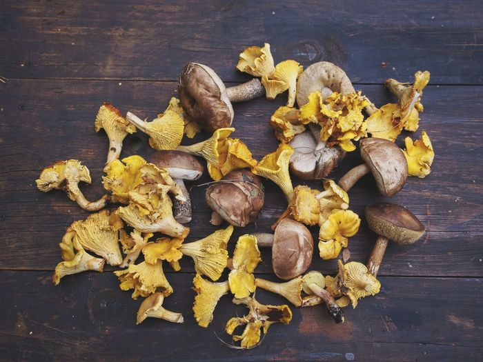 Boletes and Chanterelles on a wooden table Nature Harvesting Mushroom Picking Food Edible Mushroom Edible  Bolete Chanterelles Mushroom Forest Yellow Table Wood - Material High Angle View Close-up Edible Mushroom Wild Raw Food Fungus