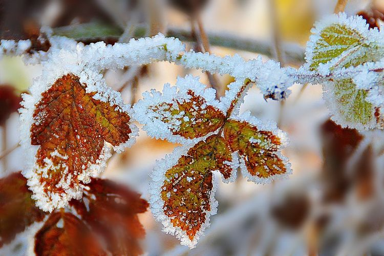cold temperature