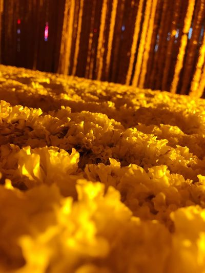 Yellow Flower Nature Selective Focus No People Fragility Freshness Close-up Outdoors Night IPhoneography Rememberance For The King Rama9 Tons Of Flowers