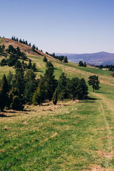 Hill Idyllic Mountain Nature Outdoors Pieniny Poland Scenics Tranquil Scene