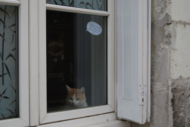 Animal Animal Themes Cat Indoors  Looking No People Pets Window #NotYourCliche Love Letter