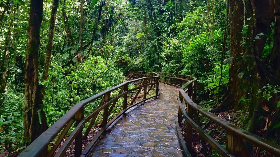 Jungle Guadeloupe Love Jungle Beautiful Like