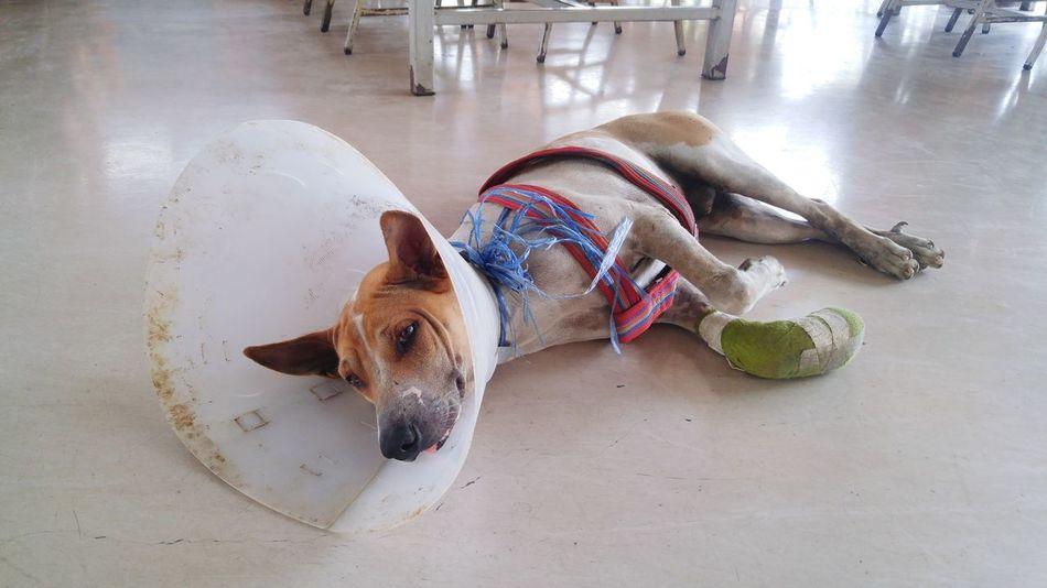 Dogoftheday Dog Dogstagram Domestic Animals DogLove Dog Lover Dog Life Dog Portrait Dogs Of EyeEm Dog Sleeping