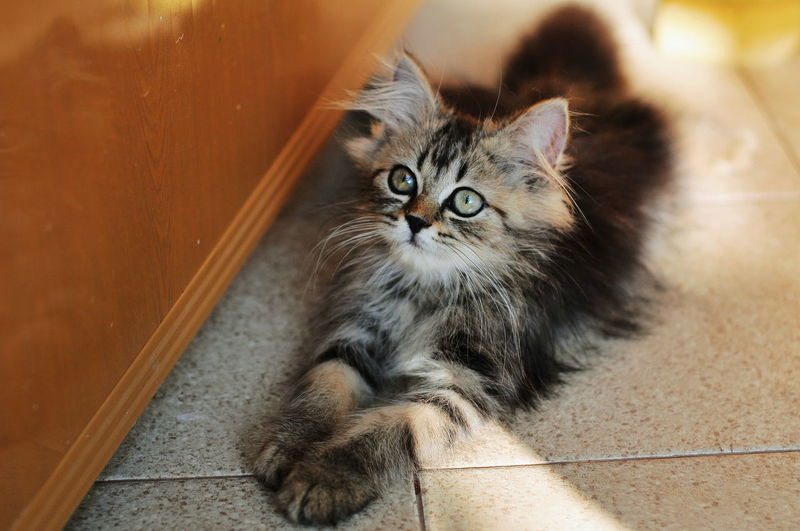 Animal Themes Cat Lovers Cats Of EyeEm Cats 🐱 Kitten 🐱 Pets Kitten Portrait Feline Domestic Cat Looking At Camera Sitting Whisker Maine Coon Cat Close-up Tabby Cat Persian Cat  Animal Eye Tortoiseshell Cat Cat Animal Hair Animal Nose Animal Face Siamese Cat Yellow Eyes