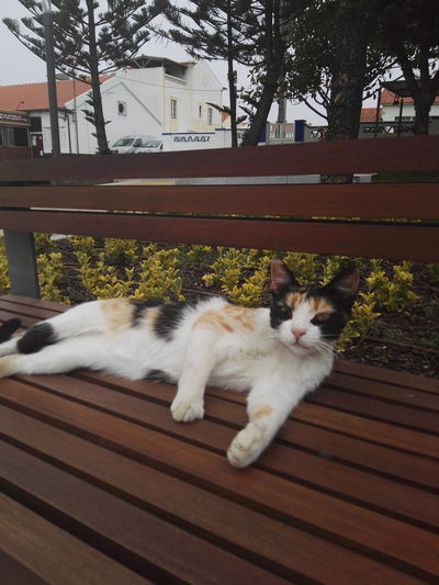 Hanging Out Taking Photos Check This Out Relaxing Enjoying Life Costa Vicentina Zambujeira Do Mar Lazy Cat Cat Lovers No Filter, No Edit, Just Photography Vacation Time Catslife Pet Portraits
