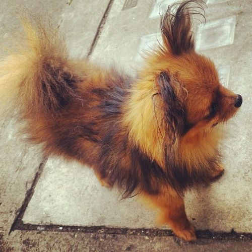 Meet my fluffy friend I met at the cafe for brekky! Londonlife Fluffy Itssofluffyicoulddie