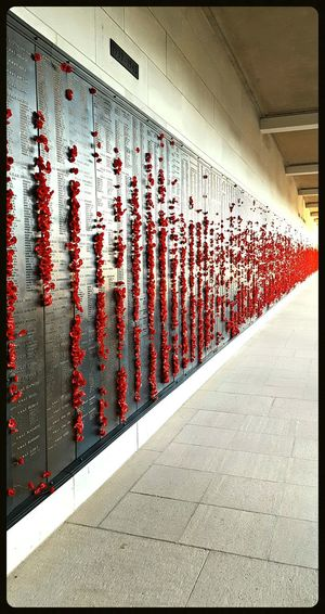 Exhibition Being Cultured Absorbing Learning Getting Inspired War Memorial Poppy Flowers Lest We Forget