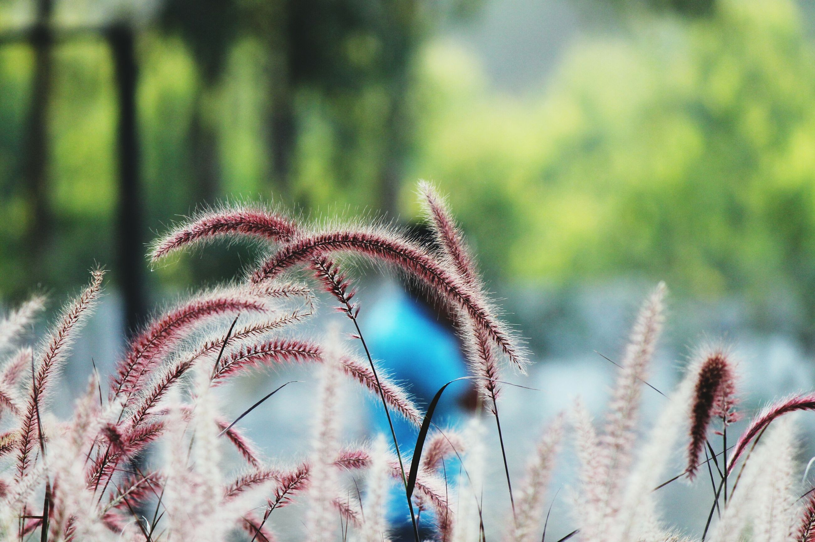 focus on foreground, close-up, growth, plant, nature, spiked, beauty in nature, selective focus, outdoors, day, thorn, cactus, no people, sharp, growing, field, stem, tranquility, dry, fragility
