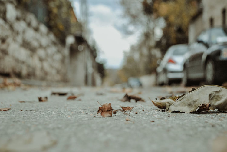 Surface level of dry leaves on road