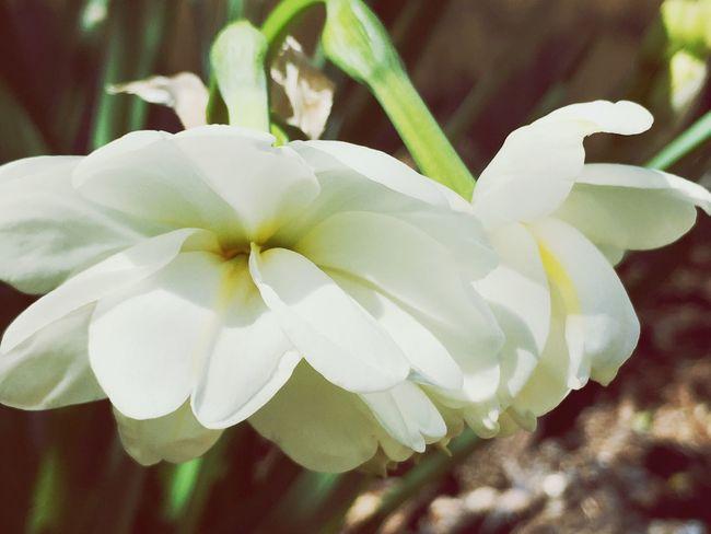 Llueixen Flower Fragility Nature Beauty In Nature Petal Spring Flowers Springtime Garden Nature