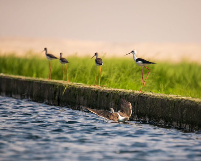 Birds perching on wooden post in lake