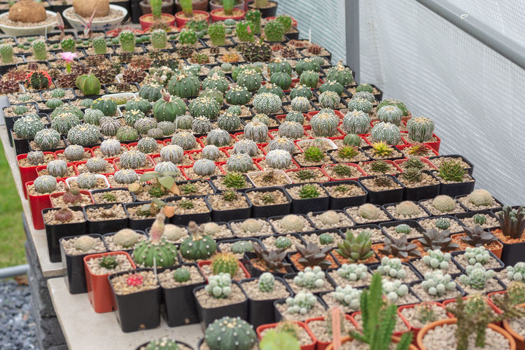 High angle view of potted plants in greenhouse