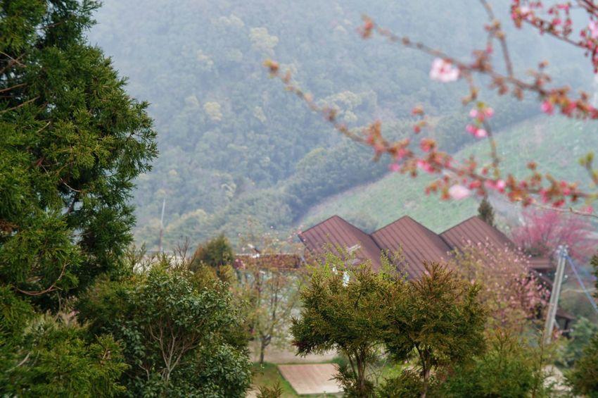 臺灣 恩愛農場 Tree Outdoors No People Nature Building Exterior Beauty In Nature Day Architecture Sky