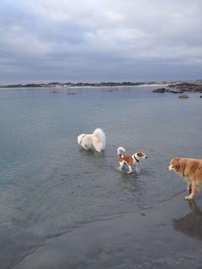 Dog Norway Sky And Sea Kromfohrlander