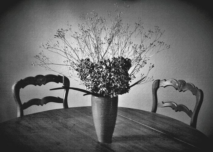 Indoors  No People Autumn Fragility Tranquility Tranquil Scene Flowers Presence Absence Lack