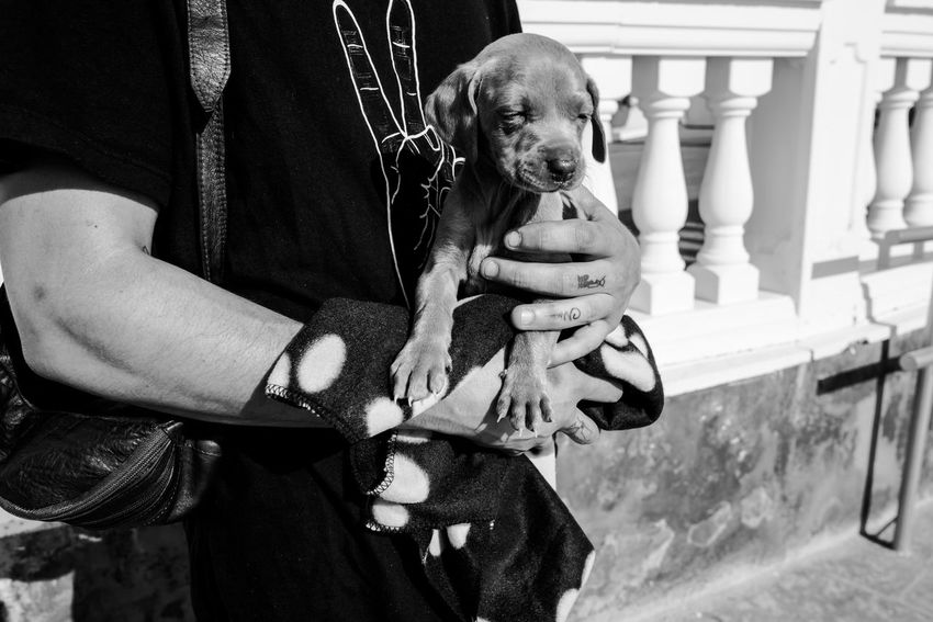Animal Blackandwhite Bonding Delphinegidoinphotography Dog Domestic Life Holding Human Body Part Human Hand Lifestyle Lifestyle Photography Lifestyles Mallorca Mammal Outdoors Puppy Puppy Love Real People Streetphotography Togetherness Cute Dog  Cute Pets Cute Puppy Cutenessoverload