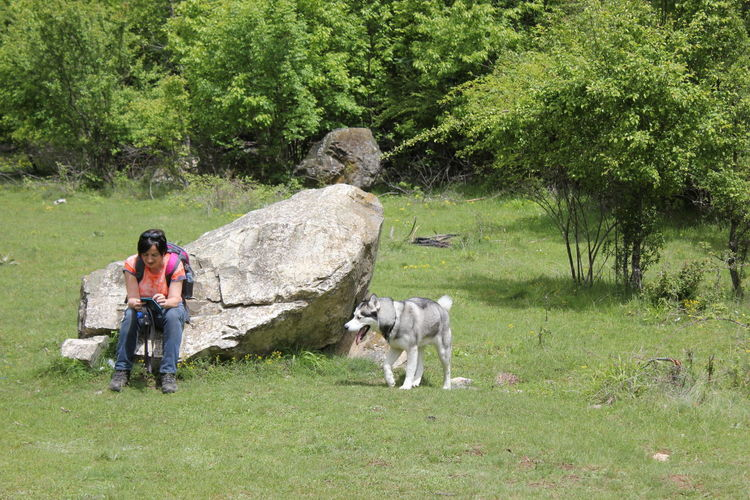 Mammal Plant Domestic Animals Tree Full Length Domestic Pets One Animal Grass Nature People Day Adult Green Color Standing Rock Outdoors Siberian Husky Husky Man And Dog Dihovo Beauty In Nature Calm