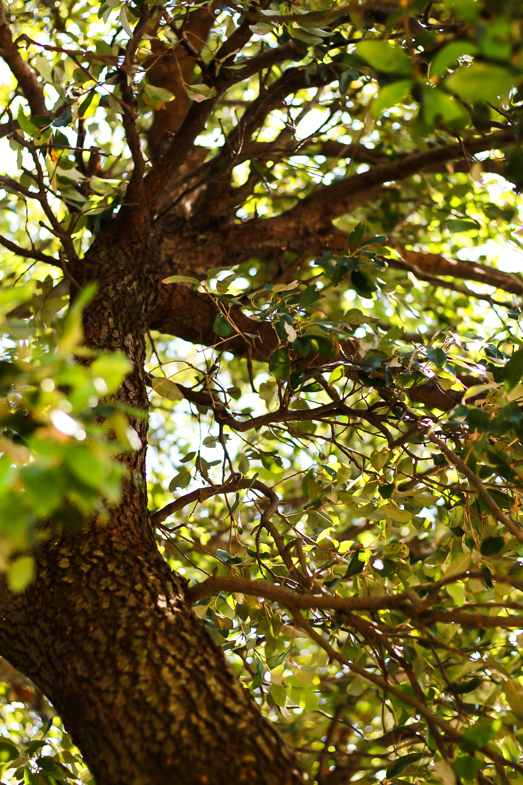 tree, plant, low angle view, growth, branch, nature, day, no people, tree trunk, trunk, green color, beauty in nature, plant part, leaf, outdoors, tranquility, focus on foreground, sunlight, close-up, selective focus, tree canopy