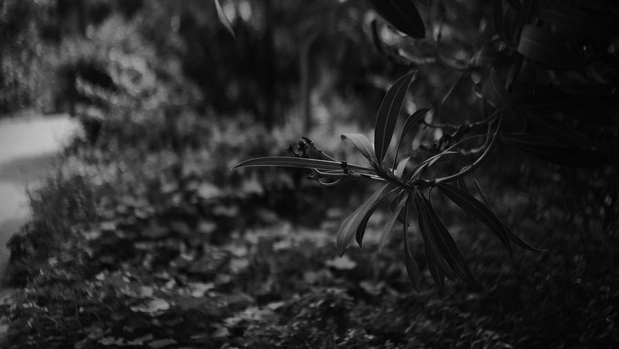 B&w Nature Plant Blackandwhite EyeEmNewHere B&w Photography First Eyeem Photo Fujifilm X-e1 Bokeh Dof Fujifilmxe1 Benidorm