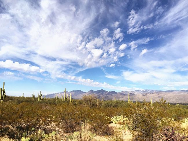 Mountain Sky Nature Scenics Landscape Beauty In Nature Tranquility No People Tranquil Scene Cloud - Sky Day Mountain Range Outdoors Growth Tree Wilderness Area Grass Cactus Desert