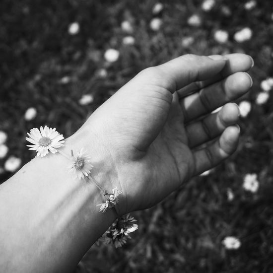 Daisy Chain Daisy Daisy Flower Daisys Daisy ♥ Daisychain Beauty In Nature Eye4photography  EyeEm Best Edits EyeEm Best Shots Flower Porn Flower Flower Collection Flowers Blackandwhite Black And White Black & White Blackandwhite Photography Black And White Photography Hand Handmade Jewellery Hands Creativity Light And Shadow Hand Photography