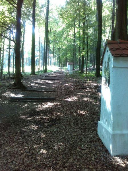 jesus christ walk,near aschaffenburg in the forest... Schattenspiel  TreePorn EyeEm Nature Lover EyeEm Best Shots