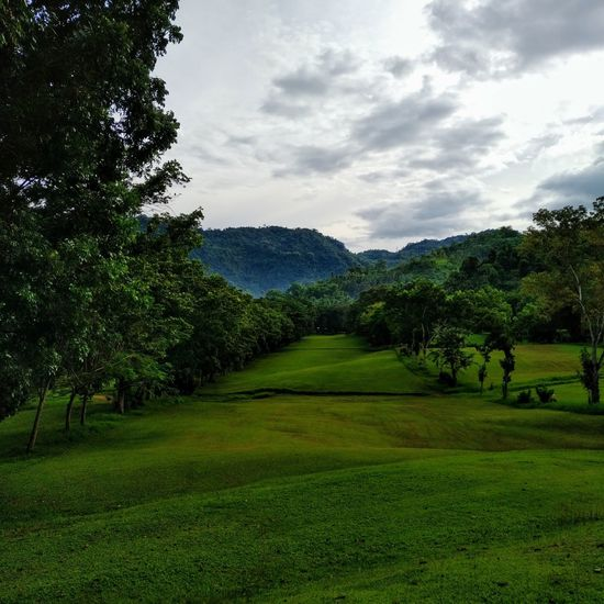 Golfing Landscape Narrow Fairway Nature View Tree Nature Green Color Beauty In Nature Growth Cloud - Sky Tranquility No People Grass Scenics Sky Day Outdoors Lost In The Landscape